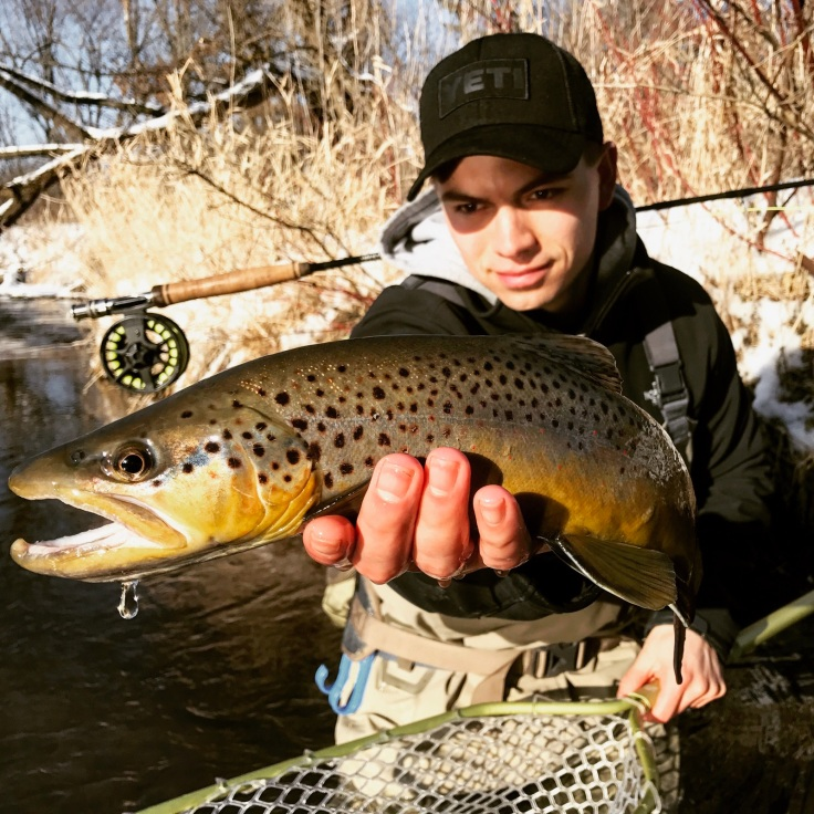 driftless brown trout