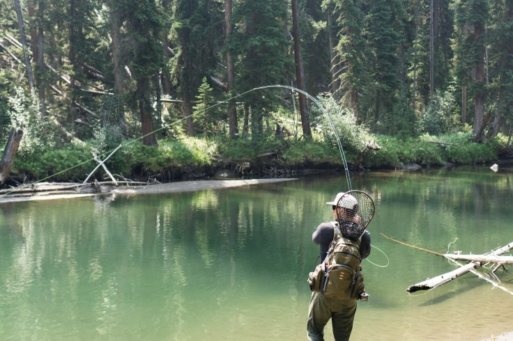 Wyoming dry fly fishing, Yellowstone fly fishing